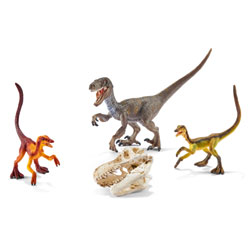 Kit 3 Vélociraptors et crâne