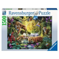 Puzzle 1500 pièces Tigres