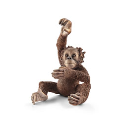 Jeune orang-outan