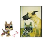 Petshop Grand Danois et Carte Postale