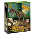 Dino kit d'excavation et squelette du carnotaure 30 cm