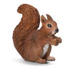 Ecureuil mangeant