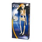 Coffret Science Squelette corp Humain