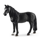 Cheval Hongre Tennessee Walker