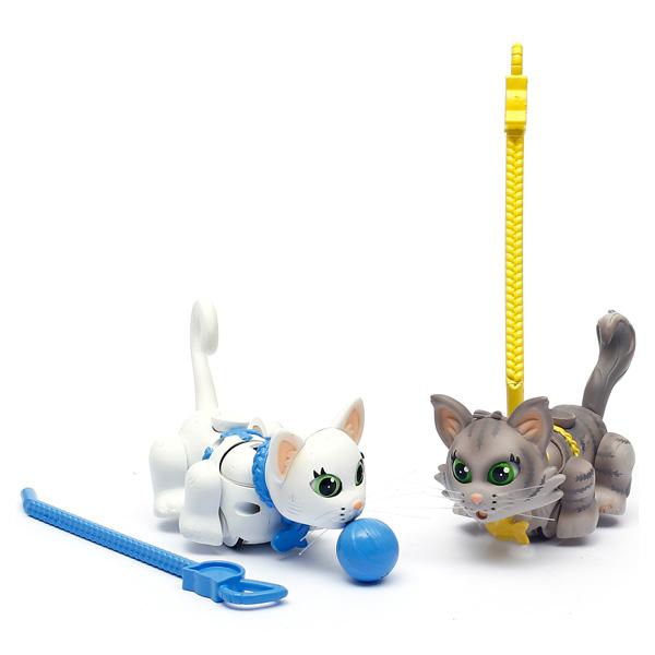 Pet parade 2 chats blanc court et gris de Sibérie