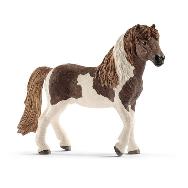 Étalon poney islandais