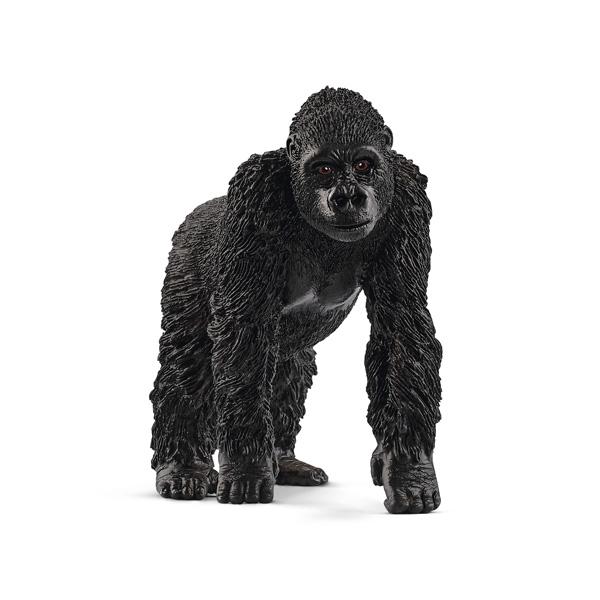 Gorille femelle