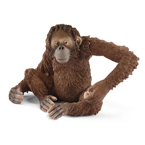 Orang-outan femelle