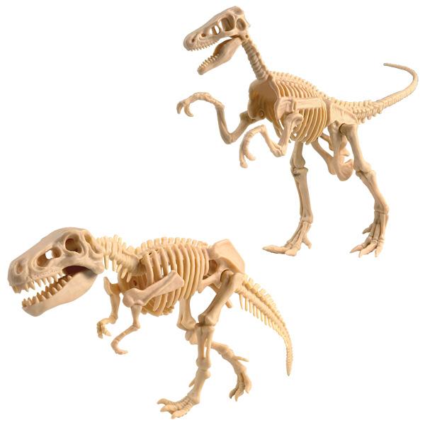 La paléontologie : le tyrannosaure pour 17€